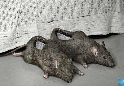 most-disturbing-shoe-the-rat-shoe